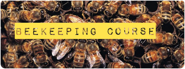 beekeeping-course